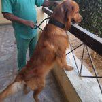 كلاب للتبني - مزرعة عرابي للخيول المميزة و الانتاج الحيوانى - oraby farm