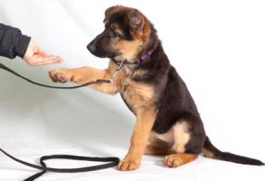 dog_training_tips
